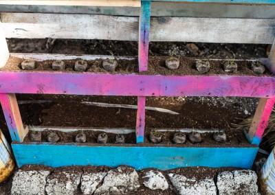Pallet Planting