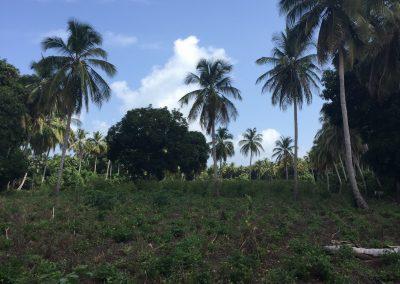 aquin farm